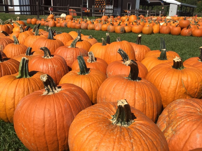5 Ways to Stay Active in Your Hometown this Fall | Healthy Helper @Healthy_Helper
