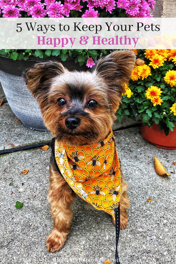5 Ways to Keep Your Pets Healthy and Happy   Simple tips for keeping your pets happy, healthy, and thriving long-term! Our animals are like our children and we want them to live as long as possible to keep us company.